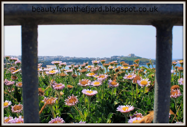 Cornwall Scenery - Newquay: Up by the hills; from the flowers point of view