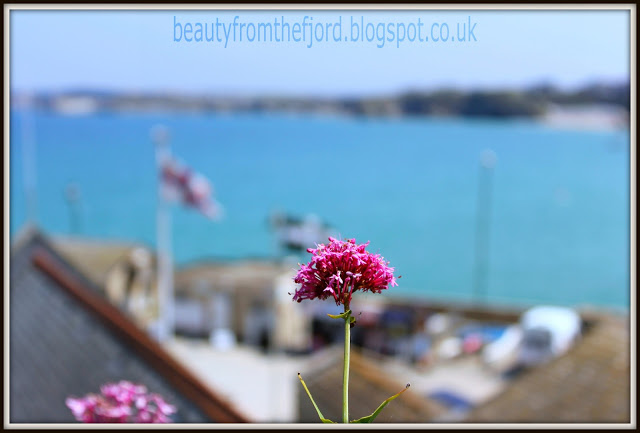 Cornwall Scenery - Newquay: That flower is definitely a cliff hanger!