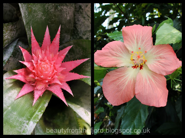 Kew Gardens -  Pink flowers: Spiky vs. round, which one do you prefer?