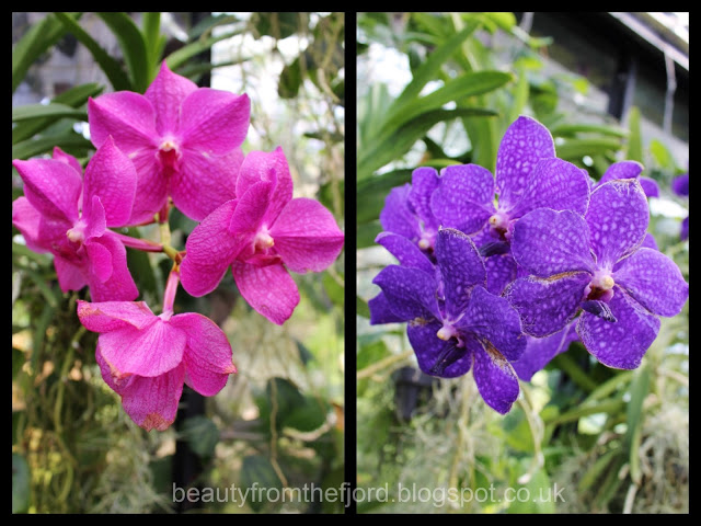 Kew Gardens - Orchids: I love orchids, I love pink and blue! Perfect combinations